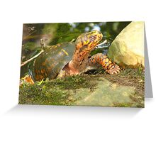 this is MY pond!!! Greeting Card