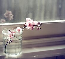 windowsill. first sign of spring. by narelle sartain