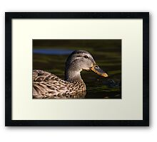 Mallard Duck Closeup Framed Print