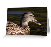 Mallard Duck Closeup Greeting Card