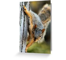 Mr. Curious Greeting Card
