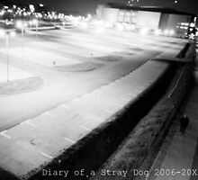 Diary of a Stray Dog 2006-20XX #003 by JT-Photos