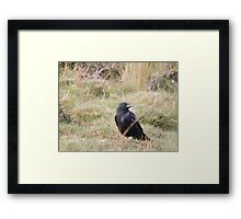 Far From The Madding Crow Framed Print