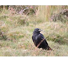 Far From The Madding Crow Photographic Print