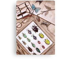 Insect Collector Metal Print