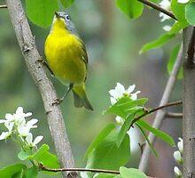 THE LITTLE BIRDIE SINGING by MsLiz