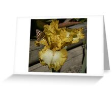 Lightbeam Iris with Painted Lady Butterfly Greeting Card