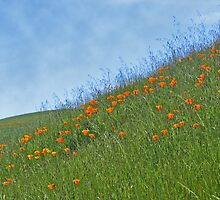 Field of Poppies by Laurie Search