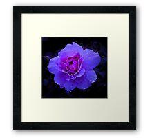 Purple Rose Challenge Framed Print