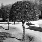 Three Trees - Madrid by Jon Julian
