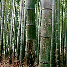 Bamboo Graffiti by geikomaiko