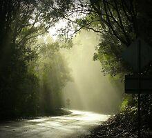 Dawn in Otways by Anuja Manchanayake