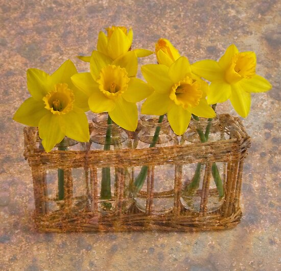 All in a row  by DIANE  FIFIELD