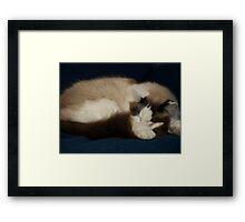 Oscar Sleeping Framed Print