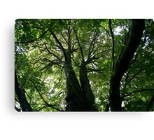 Grumpy Trees Canvas Print