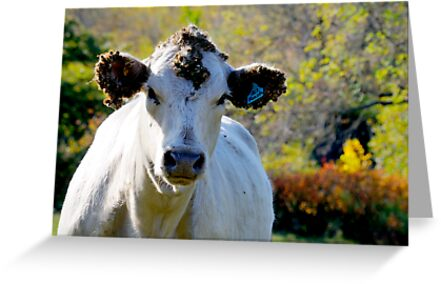 Cow   by Geoffrey