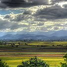 Northern NSW Cane fields by Murray Swift
