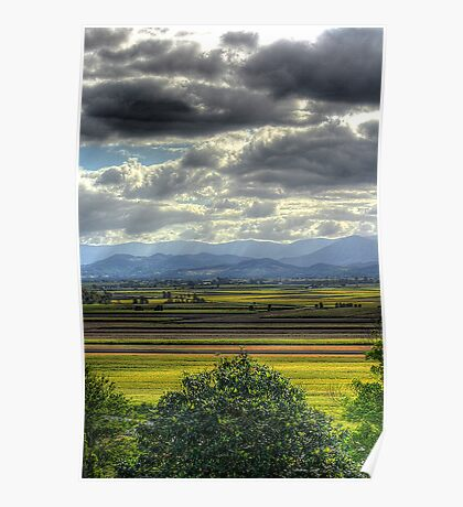 Northern NSW Cane fields Poster