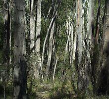 Kangaroo Trail by Ben Loveday