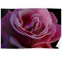 Pink Rose Portrait Poster