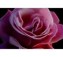 Pink Rose Portrait Photographic Print