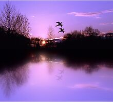 Misty Water Sunset  by Ella Hall