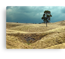 Field of Saddle Road Dreams Canvas Print