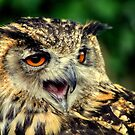 European eagle-owl  by larry flewers