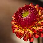 Dahlia - small orange and yellow  by KSKphotography