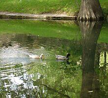Cypress Creek Ducks by Cathy Jones