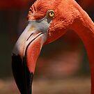 Flamingo by Maureen Clark