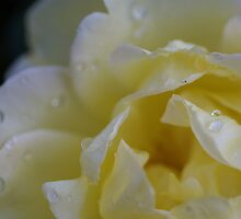 Teardrops by Eils