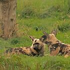 African Painted Dogs. by EdgeOfReality