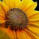 Sunflower by Nikki Collier