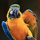 Dancing Macaw by Ann  Van Breemen