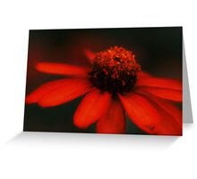 Night Beauty Greeting Card