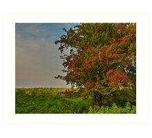 Hawthorn fruits Art Print
