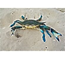 Ghost Crab Photographic Print