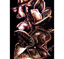 In Bloom - Pink Photographic Print