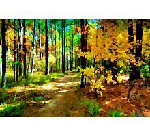 Deep In The Woods of Light & Color Photographic Print