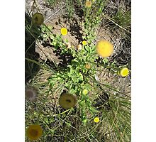Wild flower Photographic Print