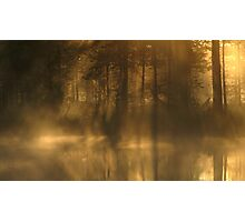 'Forest, water, light' Photographic Print