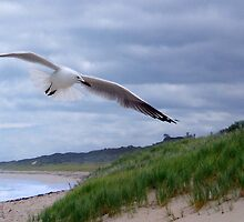 Gull by georgieboy98
