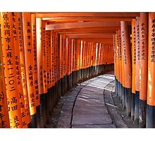 The torii gates of Fushimi Inari-taisha Photographic Print