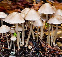 little mushrooms by Jeffrey  Sinnock