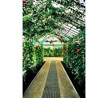 Royal Greenhouses - Laeken, Belgium Photographic Print