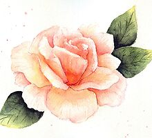 Peach Rose by LinFrye
