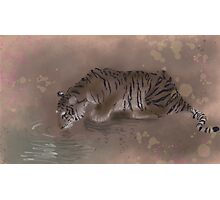 Tiger Drinking Photographic Print