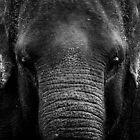 elephants by Stuart Elliott