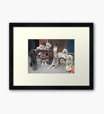Hold It!   Photo Day at Doggy School. Framed Print